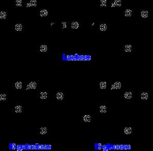 external image lactose_etc.png